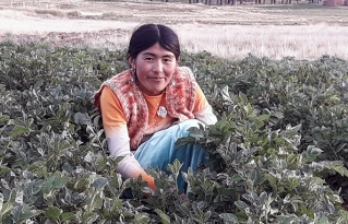 Mujeres de Taraco promueven la producción agroecológica y contribuyen a la seguridad alimentaria