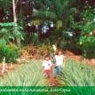 Cipca: sistemas agroforestales son la alternativa al agroextractivismo