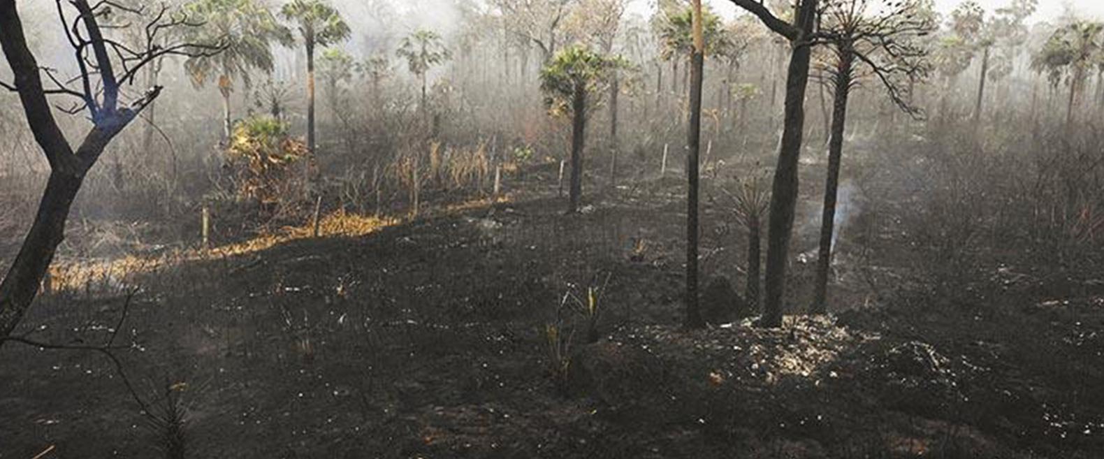 Sociedad civil pide al Gobierno incrementar aspiraciones climáticas