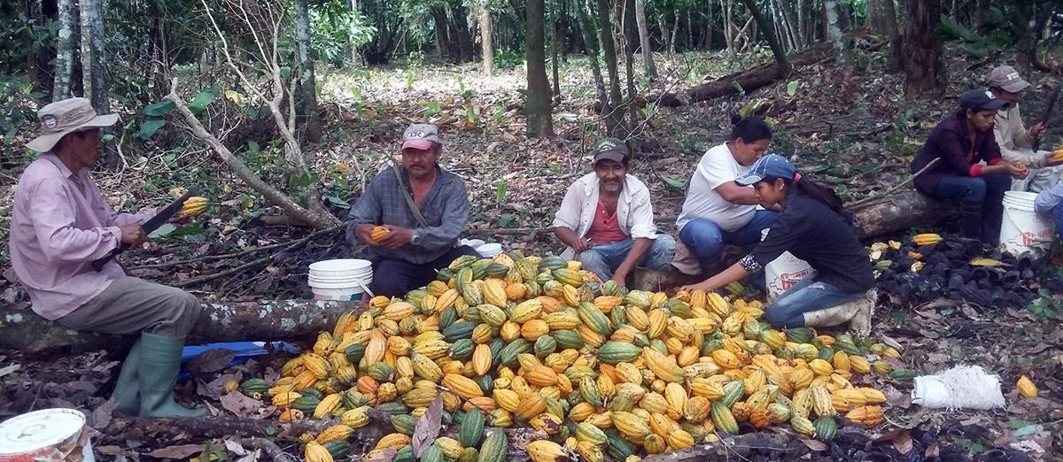 Investigaciones de CIPCA fueron difundidas en VI Congreso Nacional de Sistemas Agroforestales