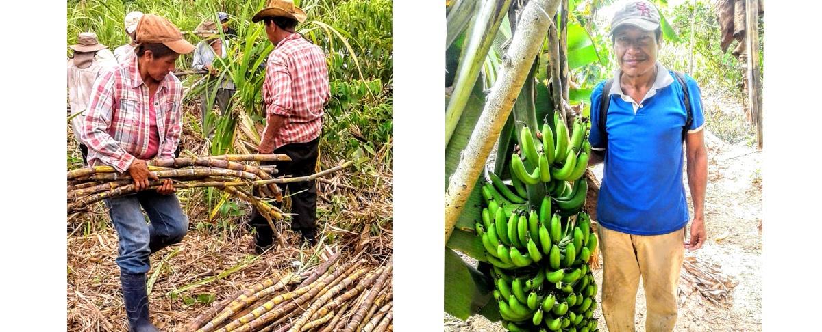 Mojos: AAIAS y Subcentrales TIM y TIMI ponen en marcha el plan de acopio, comercialización y abastecimiento de productos de la agricultura familiar