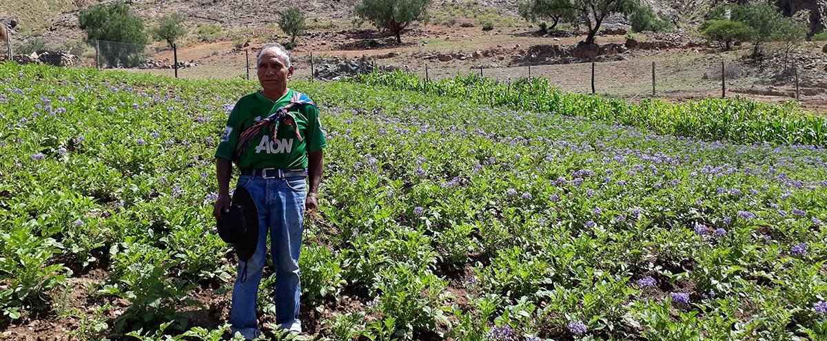 Promueven prácticas agroecológicas a través del intercambio de experiencias, feria y trueque de semillas en Torotoro