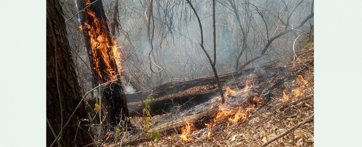 Municipio de Lagunillas declara situación de DESASTRE ante incendios