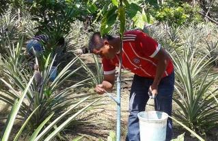 Jóvenes del norte amazónico utilizan la tecnología para mejorar la producción agroforestal