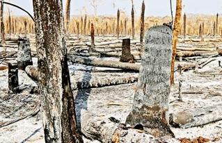 Chiquitanía: advierten confrontación, pobreza y sequía tras devastador incendio