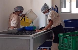 Presentación de la primera norma boliviana NB 36009:2021 para la pulpa de asaí, el fruto estrella de la Amazonía