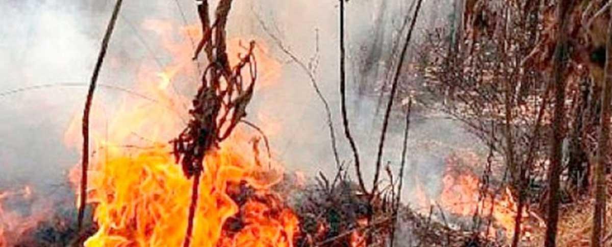 Chaqueos destruyeron 35 millones de hectáreas de bosques en 15 años