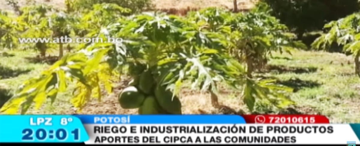 Toro Toro es el único municipio de Potosí donde no existe migración gracias a su productividad
