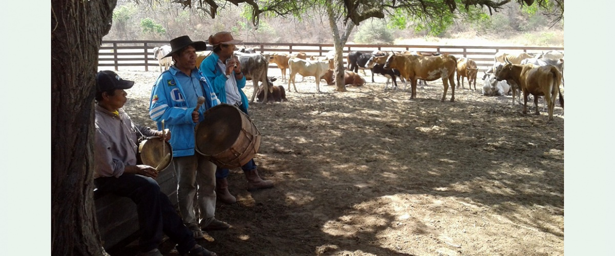 Ganadería Comunitaria Sostenible: Una nueva forma de producción bovina en el Chaco boliviano por familias guaraní
