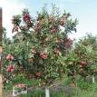 Manzanas y verduras con riego, el potencial productivo de Pojo