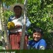Anzaldo y Torotoro: La producción anual en tiempo de Mishka