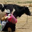 Producción de leche en tiempos de cuarentena por COVID-19