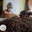 Rumbo a la cata final en Francia: Cacao de AJORA logra posicionarse entre los 50 mejores del mundo en la Edición 2021 del Cocoa of Excelllence.