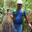 El asaí y el mal de Chagas